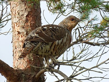 Birdwatching Holiday - Highlands and Wester Ross