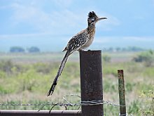 Birdwatching Holiday - NEW! Arizona and Grand Canyon