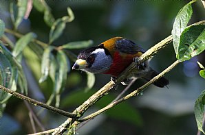 Birdwatching Holiday - Ecuador and Amazon Rainforest option