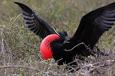 Birdwatching Holiday - The Galapagos Islands & Mainland Ecuador