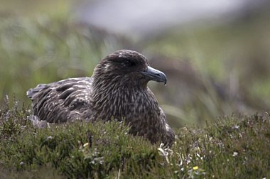 Birdwatching Holiday - High Season Across the Highlands