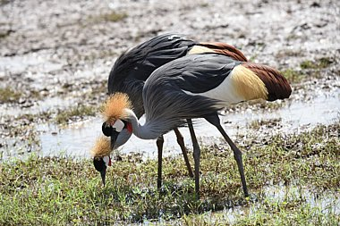 Birdwatching Holiday - NEW! Tanzania