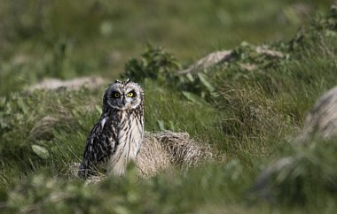 Birdwatching Holiday - Highlands & Orkney