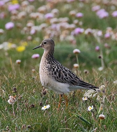 Birdwatching Holiday - Outer Hebrides in Early Autumn for birders