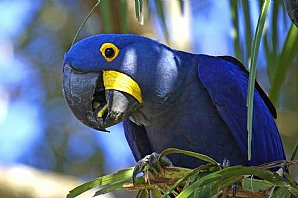 Birdwatching Holiday - Brazil - The Pantanal
