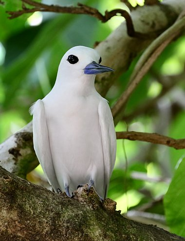 Birdwatching Holiday - NEW! The Seychelles