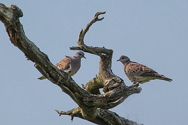 Birdwatching Holiday - NEW! Sussex, Hampshire and Kent in Spring